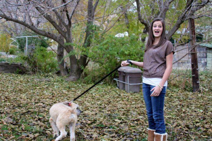 Best Dog Leg Splint For Angular Deformity