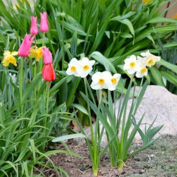 Spring Flowers 2012 08