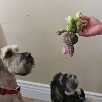 Garden Sprouts 08