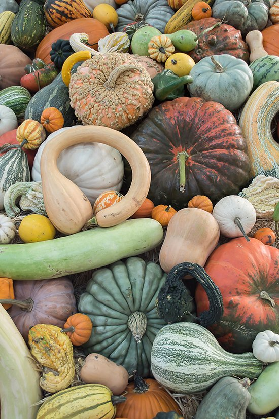 Heirloom Pumpkins Squash and Gourds whiskandmuddler.com