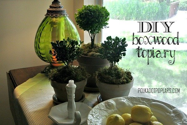 DIY Boxwood Topiary by www.polkadotpoplars.com on www.cookingwithruthie.com is an adorable project for your home!